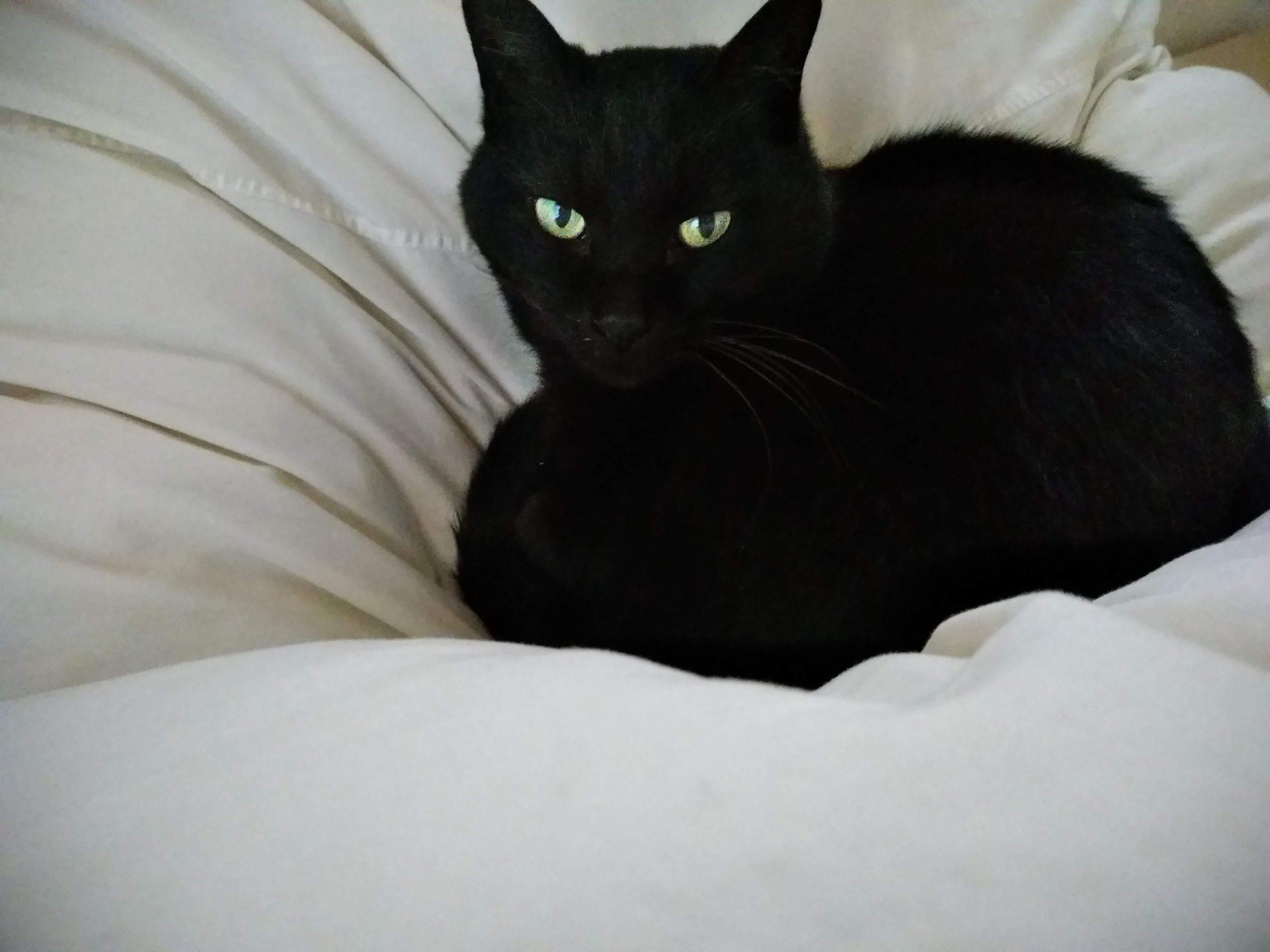 黒猫のジジ