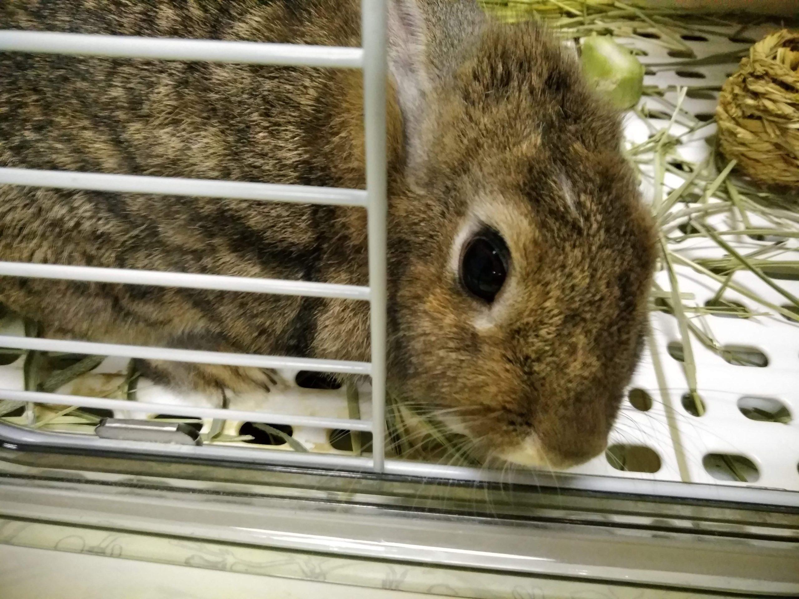 ミニウサギのミミちゃん